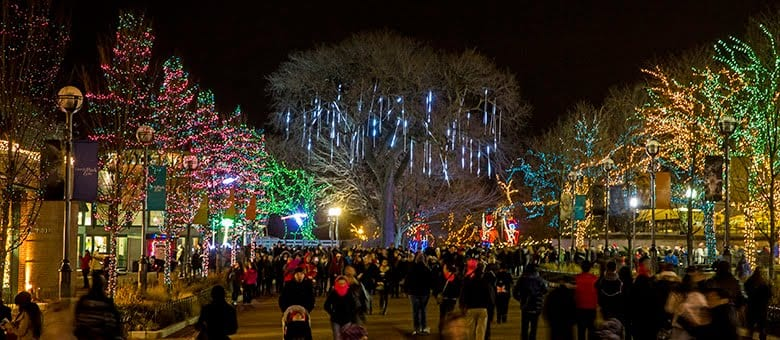 night scene of decorated trees and crowd of people