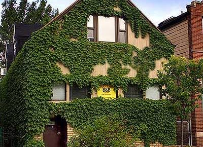 front of building covered in ivy