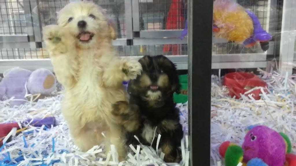 puppies behind glass